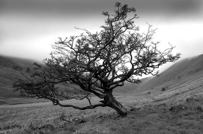 http://www.freeimages.com/photo/lonely-hawthorn-tree-1313433